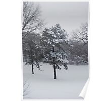 Snowfilled Trees - Bethpage Park Poster