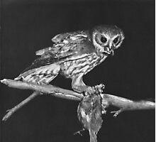 Hunting Owl Photographic Print