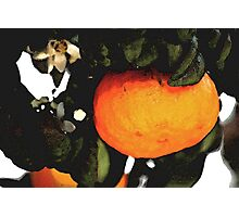Just an orange Photographic Print