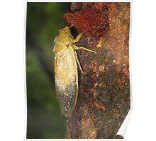 bug on tree Poster