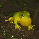 frog by lack mating call by Ashlee MIlls