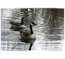 Canada Geese ~ Beus Pond Poster