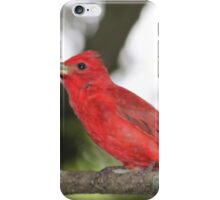 Red Tanager iPhone Case/Skin