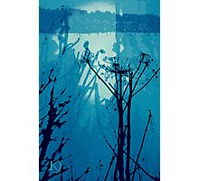 Giant Hogweed Blue Photographic Print