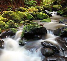Verdant Stream Sleeps, Otways, Great Ocean Road, Australia by Michael Boniwell