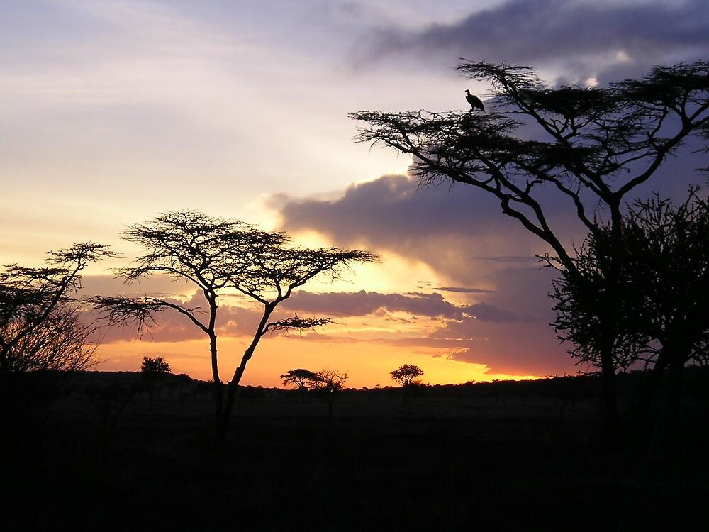 Kenyan Sunset by stablegirl