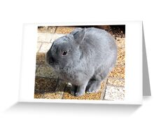Please Sir, May I Have...a Carrot? Greeting Card