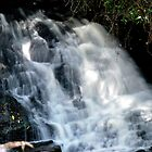 Falls at Springbrook in the Sunlight by Lozzar Landscape