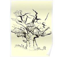 Baobab tree Poster