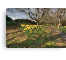Daffodil path Canvas Print