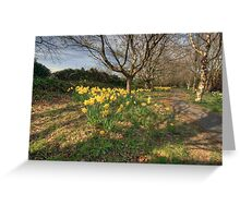 Daffodil path Greeting Card