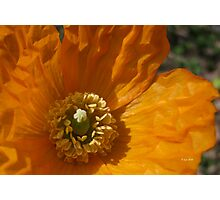 Wrinkled Perfection Photographic Print