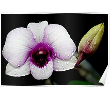 Pretty Blue Orchid Poster
