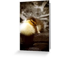 Easter Warmth Greeting Card