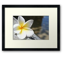 Frangipani by the Water's Edge Framed Print