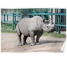 Rhinocerous 3 Poster