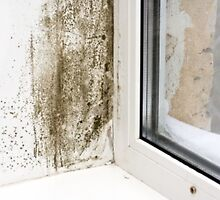 Mold Removal Service by moldremoval