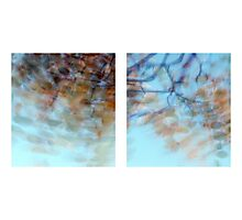 Autumn Impressions - Diptych #1 Photographic Print