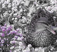 Hello Birdy by LuLuMu