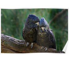 SNUGGLING COCKIES Poster