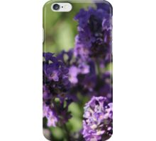 Lavender in the summer iPhone Case/Skin