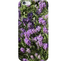 Lavender in the summer 2 iPhone Case/Skin