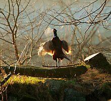Good morning!! by Alan Mattison