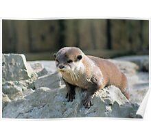 Otter 2 Poster