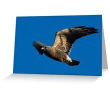 0404102 Swainson's Hawk Greeting Card