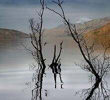 Tree branches in Loch Tay by Mabel Forsyth