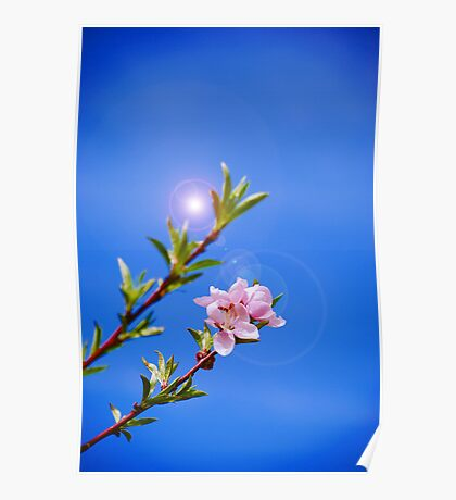 Just Peachy - Peach Blossom Art Poster