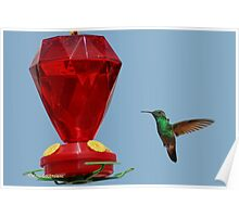 Hummingbird.. Lunch Time1 Poster