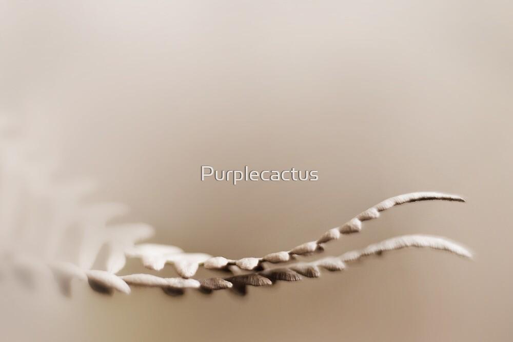 conform by Purplecactus