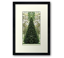 Cone topiary 2 Framed Print