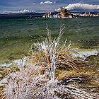 Calcium, Mono Lake by morealtitude