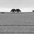 Rorscach Tree by Sandra Moore