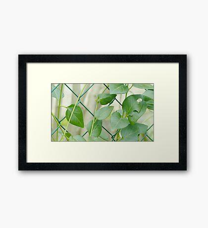 Green climbing plant Framed Print