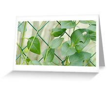 Green climbing plant Greeting Card