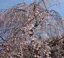 blossoming tree by vigor
