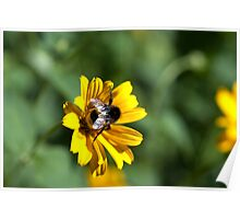 Bee on yellow flower Poster