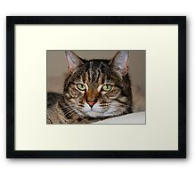 14 and still as cute as a kitten Framed Print