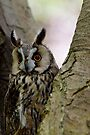 Long Eared Owl in Tree by buttonpresser
