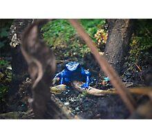 Blue Poison Dart Frog  Photographic Print