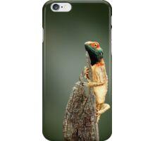 Ground agama (lizard) sunbathing iPhone Case/Skin