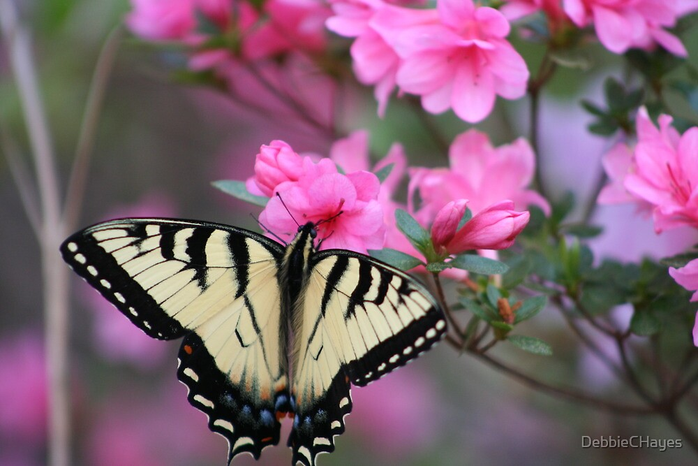 Yellow Butterfly on Pink Azalea by DebbieCHayes