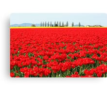 Fire Engine Red Tulips Canvas Print