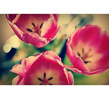Tulips.... Photographic Print