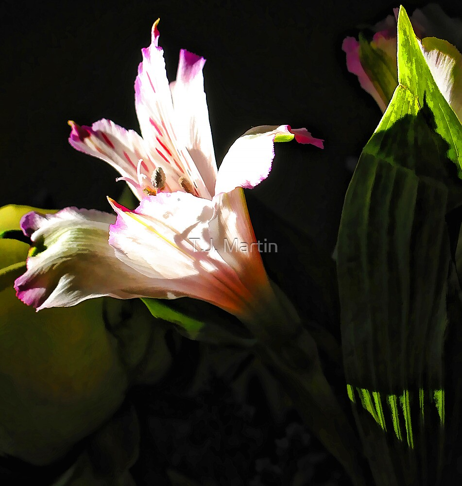 Birthday Bouquet - Peruvian Lilly in th Afternoon Sun  by T.J. Martin