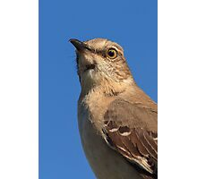 Mockingbird Portrait Photographic Print