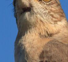 Mockingbird Portrait Sticker